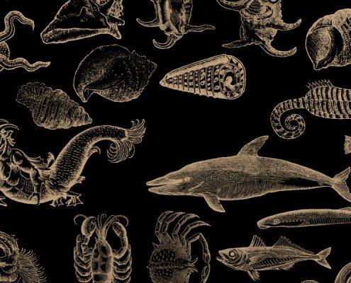 Fisch Grafik für Workshop Fish for Friends mit Jockl Kaiser