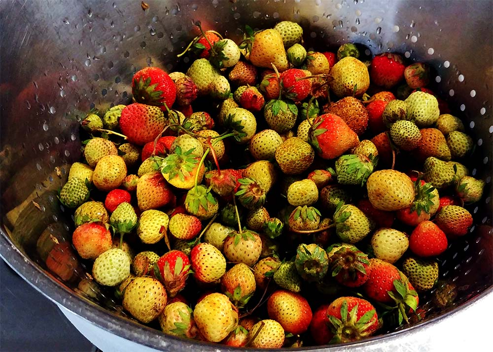 gruene Erdbeeren zum Kochen im Restaurant Meyers Keller