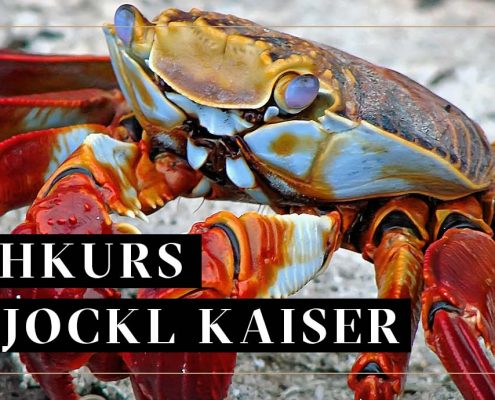 Kochkurs MEeresfrüchte Jockl Kaiser Meyers Keller